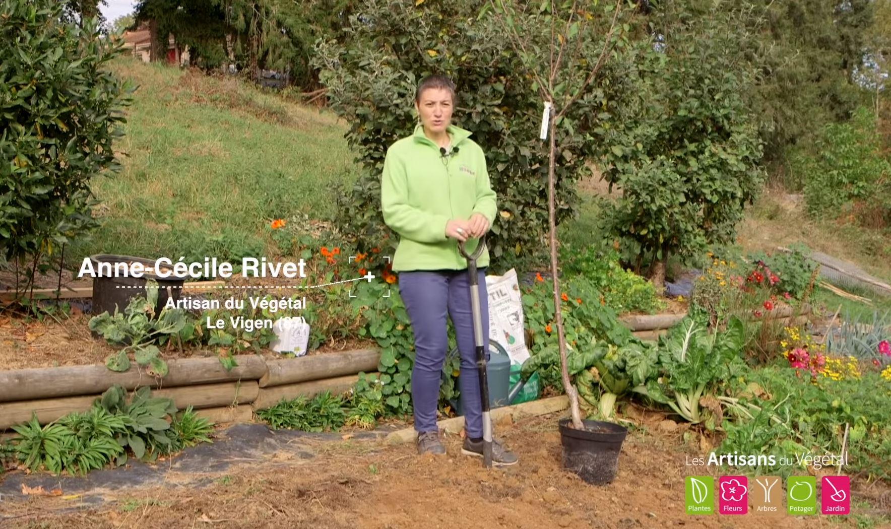 Comment Entretenir Les Fraisiers En Automne comment planter un cerisier ?